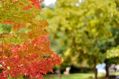 Images of autumn leaves Stock Photo