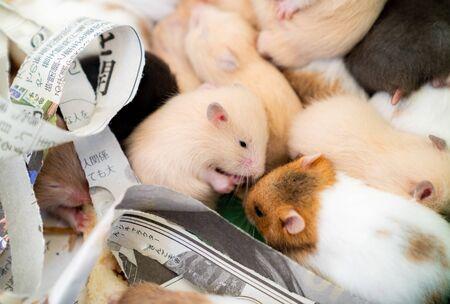 Hamster gathered  photo