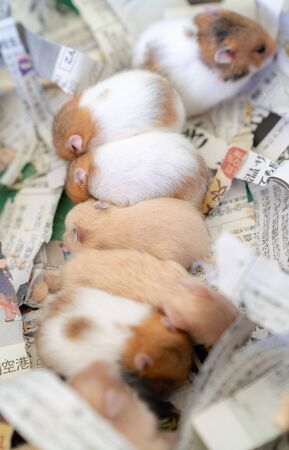 A group of hamsters lining up vertically