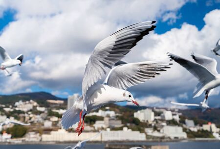 Tourist spots in Japan / Atami / Seagull and the cityscape