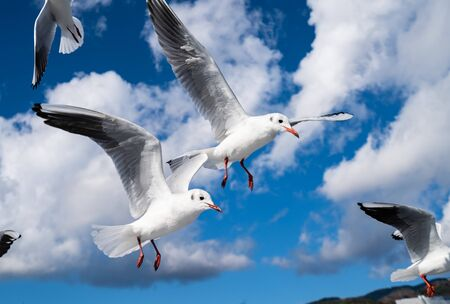 Photos of seagulls flying in the sky / Image of seabird