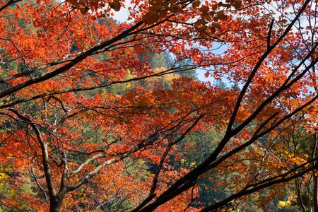 Forest and autumn leaves image