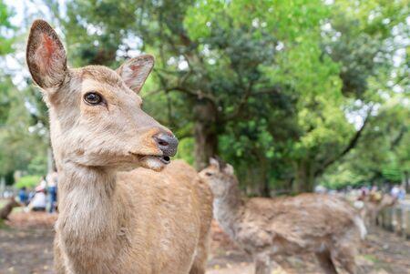Photograph of deer inhabiting