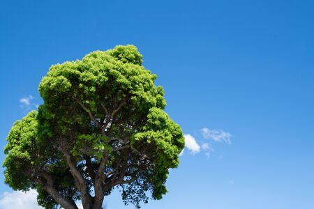 Picture of big tree and blue sky