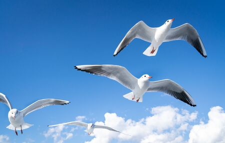 Photo of a seagull flying in the sky