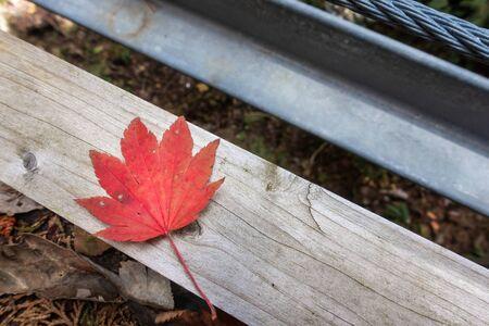 Autumn leaves. Autumn image photo. Stok Fotoğraf