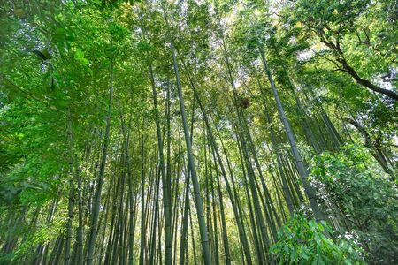 Pictures of a beautiful bamboo forest Stok Fotoğraf
