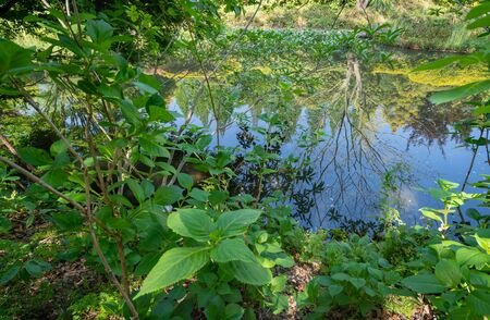 Image of beautiful forest and pond