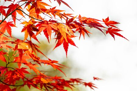 Autumn leaves and autumn image photo