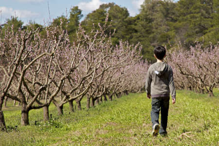 Boy Walking in Orchard photo
