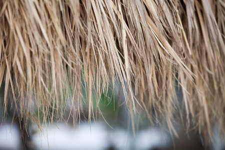 closeup of an old thatched roof background Stock Photo