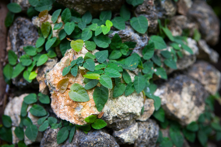Old stone wall with leaves and moss. Background and texture