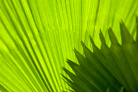 Palm leaf with diagonal lines closeup Stock Photo