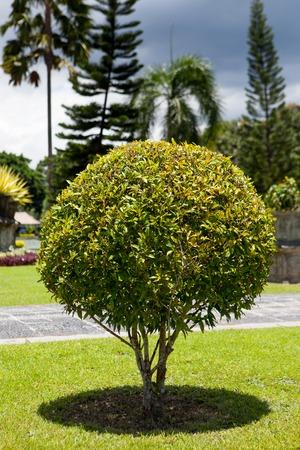 enebro: Parque con arbustos en forma de una pelota y césped verde Foto de archivo