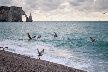 manche: The beach and cliffs of Etretat with a gloomy sky and sea gulls tourist destination of Normandy on the French coast