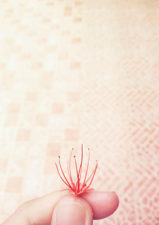 light complexion: pink day and the red flower
