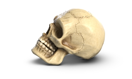 3D illustration of Human skull, isolated on white background