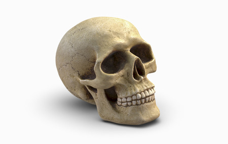3D illustration of Human skull, isolated on white background