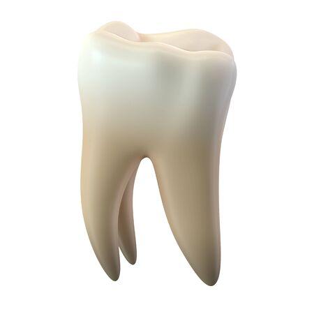 3D render of single molar tooth isolated on white Reklamní fotografie