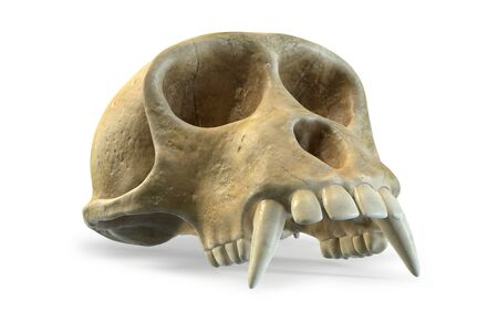 3D render of Monkey Skull isolated on white background. Фото со стока