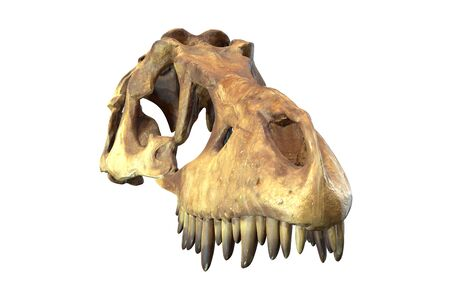 3D render of Tyrannosaurus Rex Skull isolated on white background. Imagens - 130053439