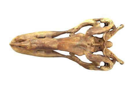 3D render of Tyrannosaurus Rex Skull isolated on white background.