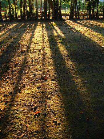 balmy: Long Shadows -- cast by the afternoon sun Stock Photo