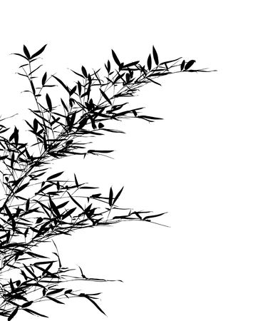 Bamboo Leaves and Branches -- resembling a Chinese drawing photo