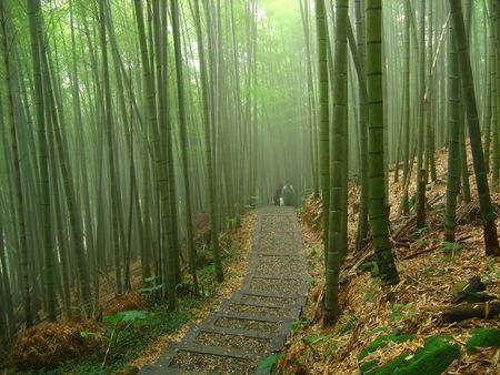 Bamboo Forest -- a misty path in an Asian forest