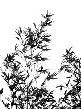 resembling: Bamboo Tree -- seen as a silhouette, resembling a Chinese painting