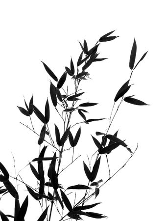 Bamboo Leaves and Branches -- seen as a silhouette, resembling a Chinese painting Stock Photo