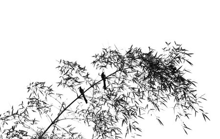 Birds on a Bamboo Tree -- resembling a Chinese painting Stock Photo