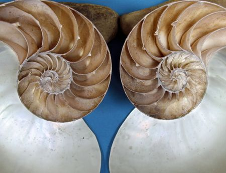 Ammonite Fossils -- these are a group of extinct marine animals