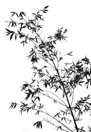Bamboo Branch -- it resembles a Chinese water color painting