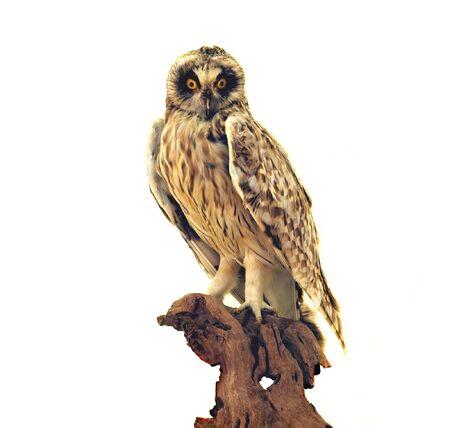 mounted: Een gekoppelde weergave van een taxidermie van een uil op een boom
