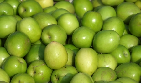 jujube fruits: Green Jujube fruits or Chinese dates are a popular fruit in Taiwan Stock Photo
