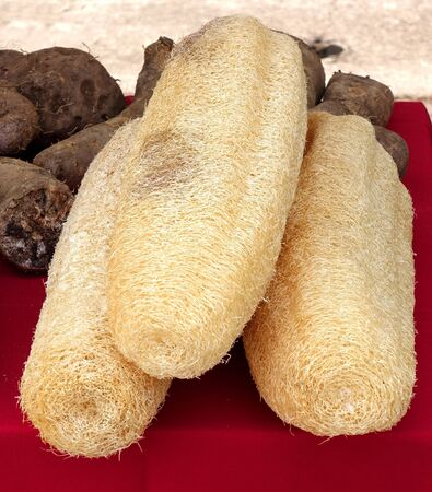 fibrous: The fibrous netting of the Chinese silk gourd (Luffa acutangula) which is used as bath sponge