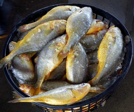 A large basket with yellow croaker fish at a fish market in Taiwan
