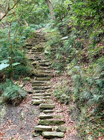 uphill: Old stone steps leading uphill in a lush green forest