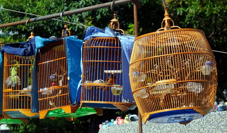 merchant: A street vendor sells birds in traditional bamboo cages