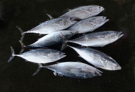 Freshly caught small-sized tuna are sold at a local fish market