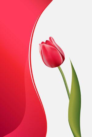 tulipe rouge: