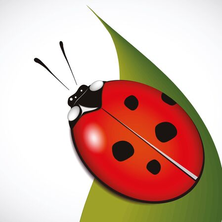 ladybird: ladybird on a leaflet