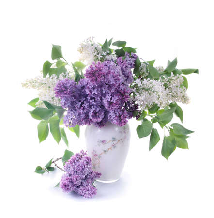 lilac: Bouquet of a lilac in a white vase on light tones.