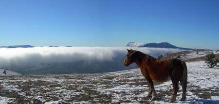 UKRAINE; CRIMEA; Black sea; YALTA; Demerdji  Mountains; a fog; the blue sky; winter; white snow; a horse; dream; of travel; height; a distance Stock Photo - 3904472