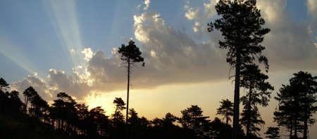 Wood morning dawn  Crimea Yalta photo