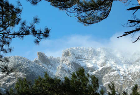 Snow-covered tops of mountains in a frame of pines photo