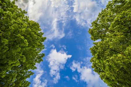 lush: Beautiful blue sky and lush green trees Stock Photo