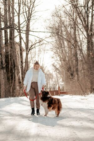 Beautiful woman walks with a dog breed Lassi. Girl with psomidut on the road. Caring for a dog. Dog is a mans friend, a true friend. Sunny winter day, vertical photo. Banco de Imagens