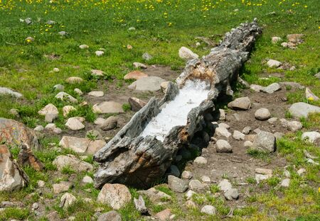 mineralized: Artificial solonetz in taiga - man-made wooden trough with salt for decoying animals on the hunt Stock Photo